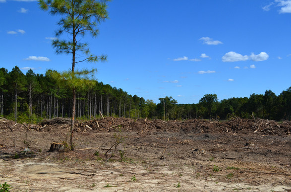 Acreage Being Cleared