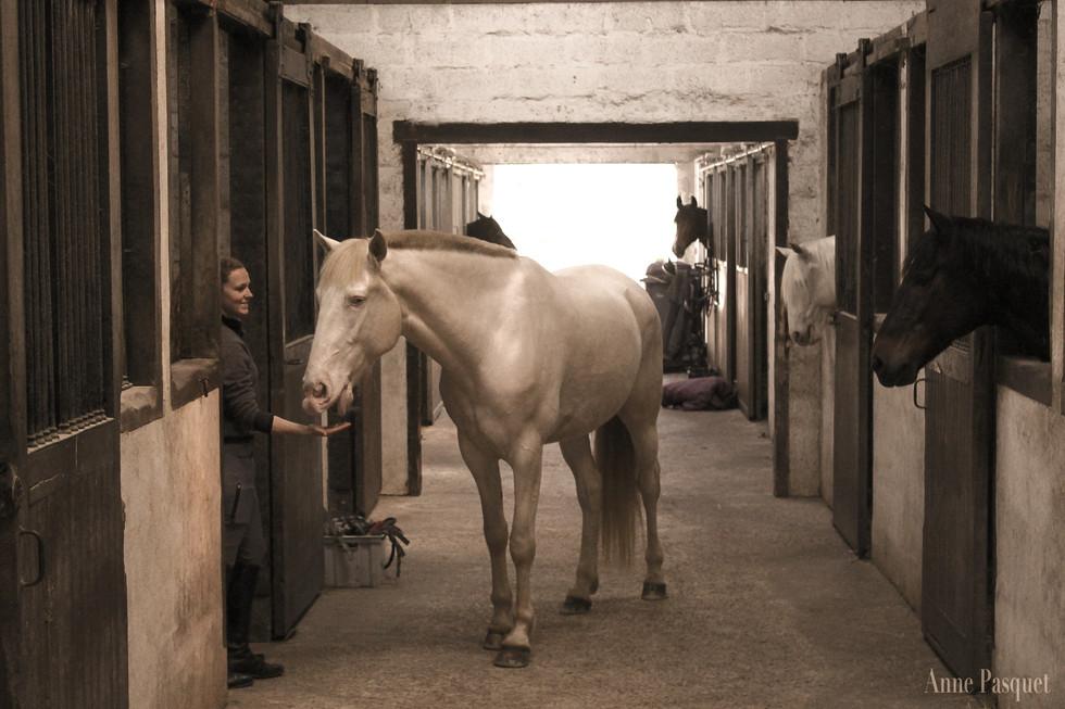 Cours chevaux d'école