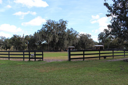 Dressage Field