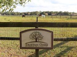 Tristan Oaks Entrance Sign