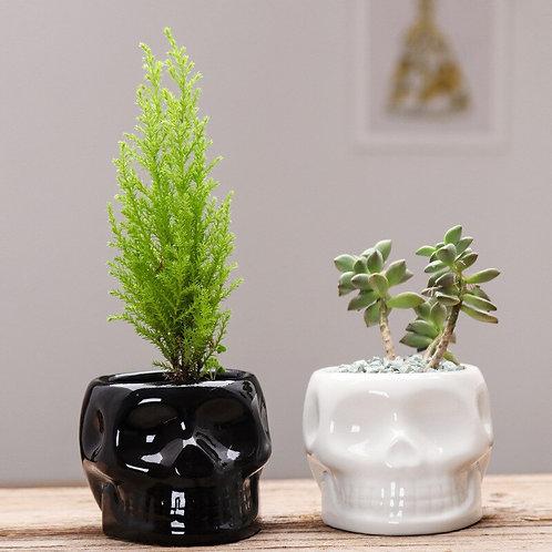 Nordic Creative Ceramic Skull Head Black or White Flower Pot