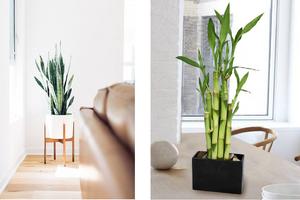 5 Best Interior Design Ideas For Your Rental Home Decorative Plants