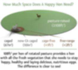 poultry diagram.jpg