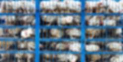 AdobeStock_52006383.jpeg