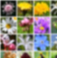 alpenblumenfinder1.jpg