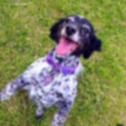 Dog walker in Bradford