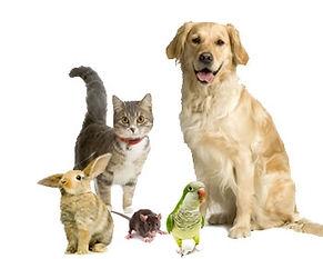 Pet sitter Bradford