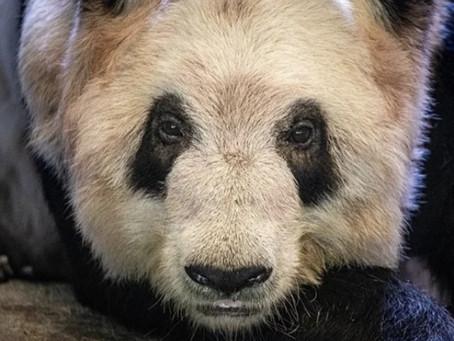Debunking Memphis Zoo's Publicity Stunt