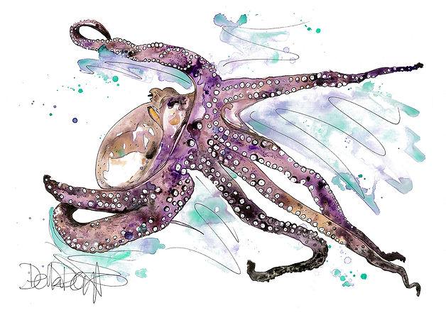 octopus_001.jpg