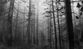 """The Cure: """"A Forest"""" Walk Can Cure the Soul"""