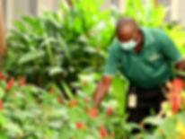 Pest control services - Uniservice Management Services