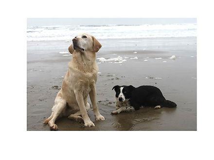dogsonbeach.jpg