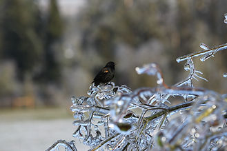 ice bird.JPG