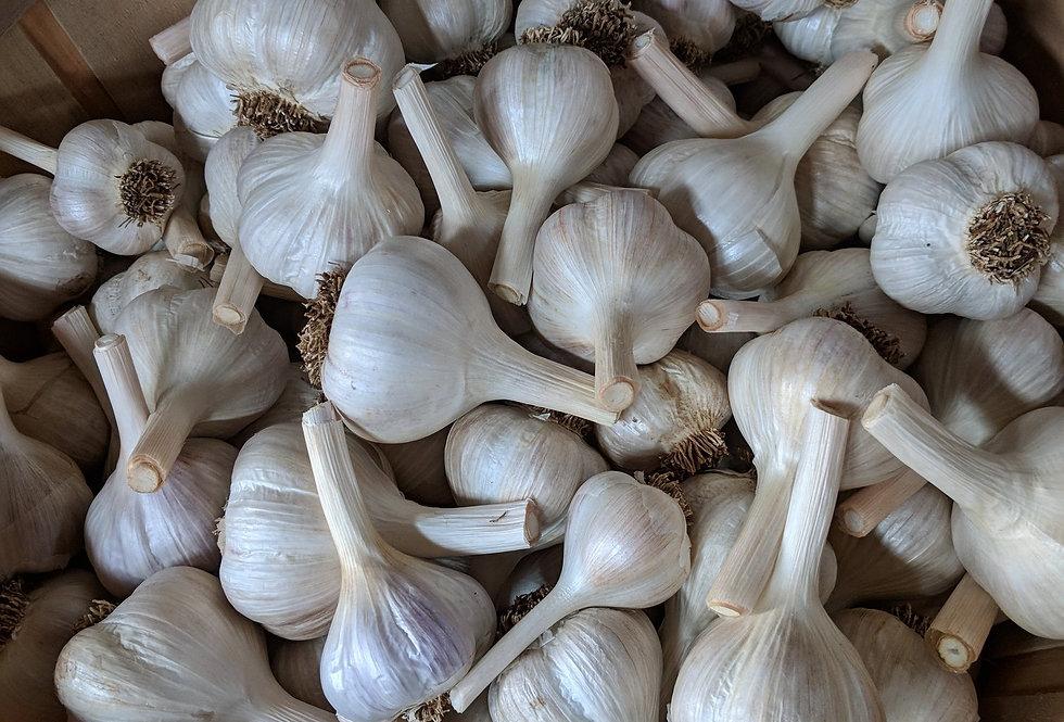 Rioja organic hardneck garlic