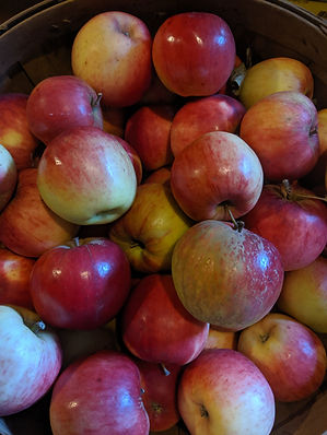 Pippen apples.jpg