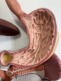 Magen Gaster Ernährung bei Magenerkrankungen