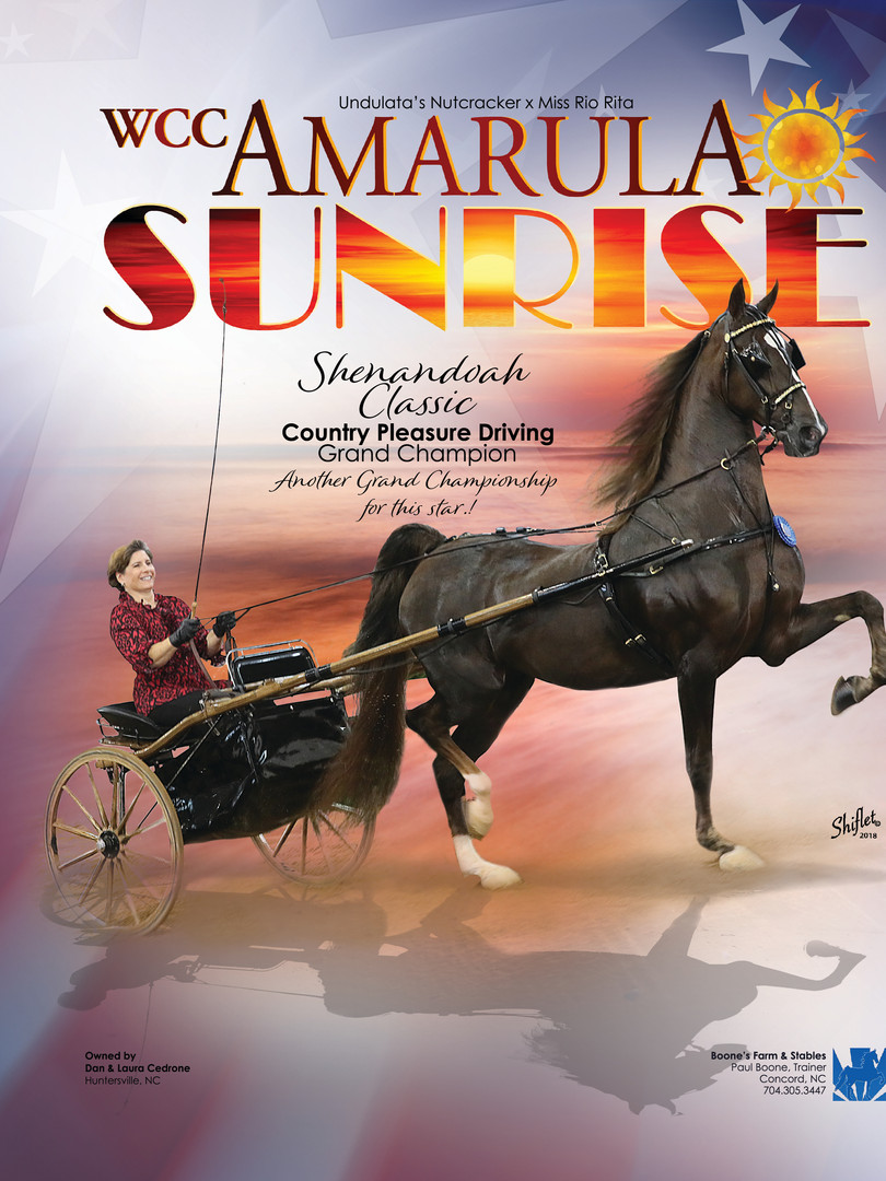 WCC CH Amarula Sunrise and Laura Cedrone Saddle & Bridle Ad