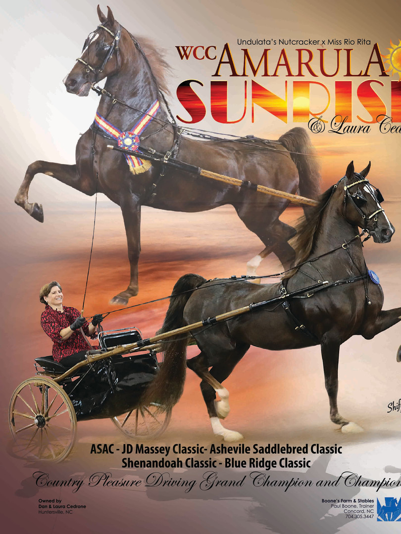 WCC CH Amarula Sunrise National Horseman Ad