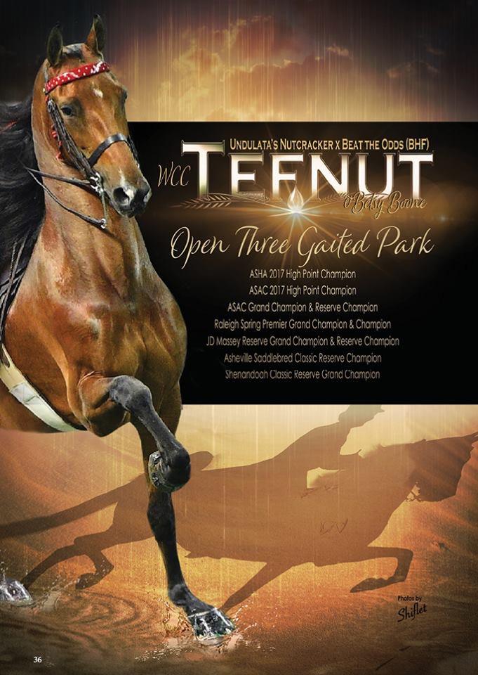 WCC Tefnut Ad Show Horse Magazine