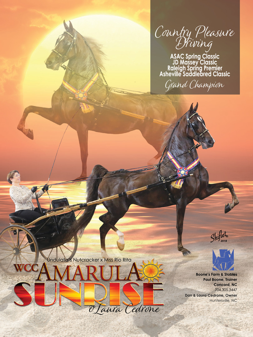 WCC CH Amarula Sunrise Saddle & Bridle Ad