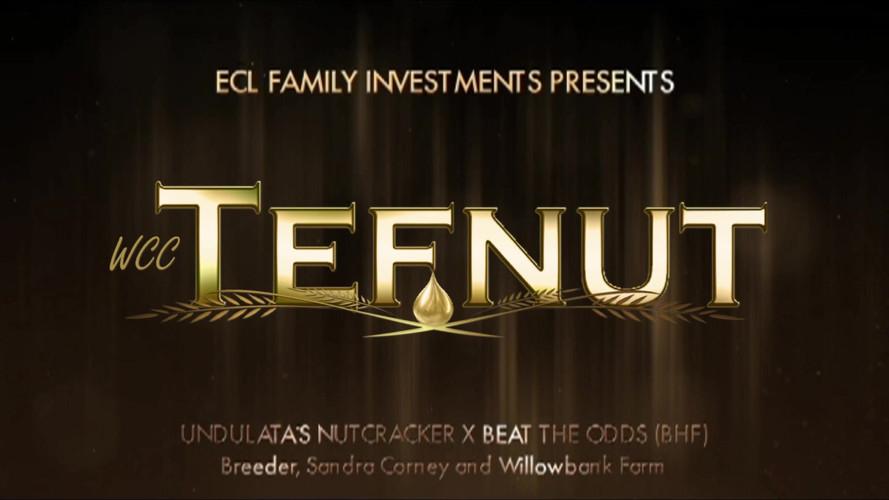 Tefnut Mixed Media Ad