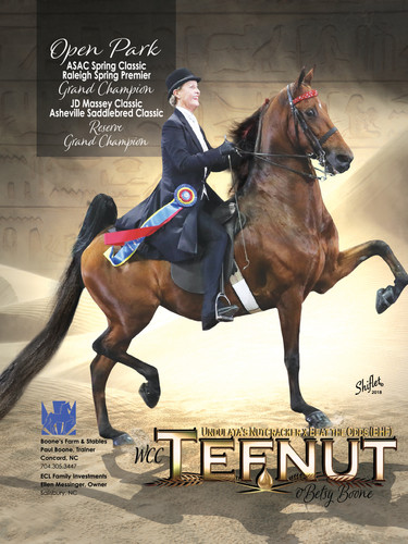 WC Tefnut and Betsy Boone Saddle & Bridle Ad