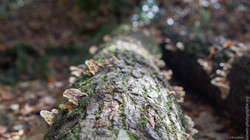 automne-4saisons-Loewen photographie-19
