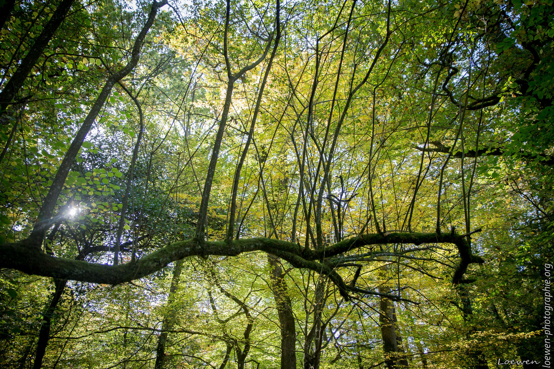 automne-4saisons-Loewen photographie-13