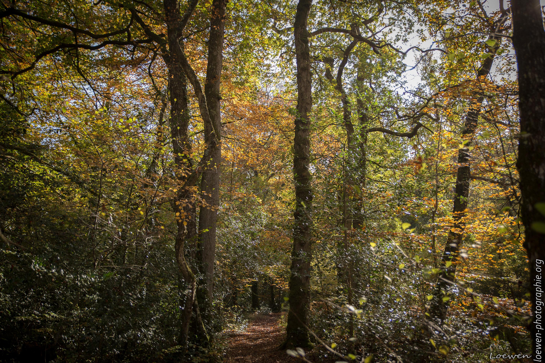 automne-4saisons-Loewen photographie-18