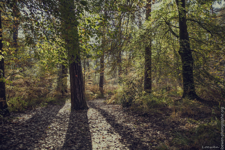 automne-4saisons-Loewen photographie-14