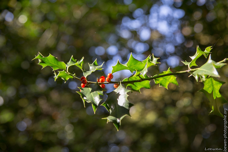 automne-4saisons-Loewen photographie-6