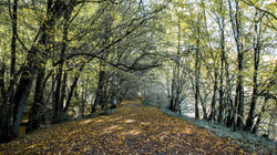 automne-4saisons-Loewen photographie-2