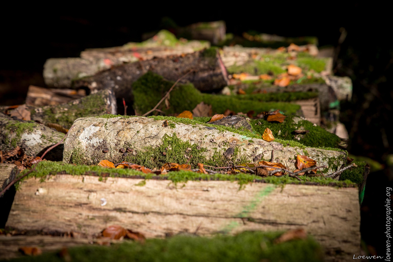 automne-4saisons-Loewen photographie-5