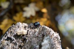 automne-4saisons-Loewen photographie-25