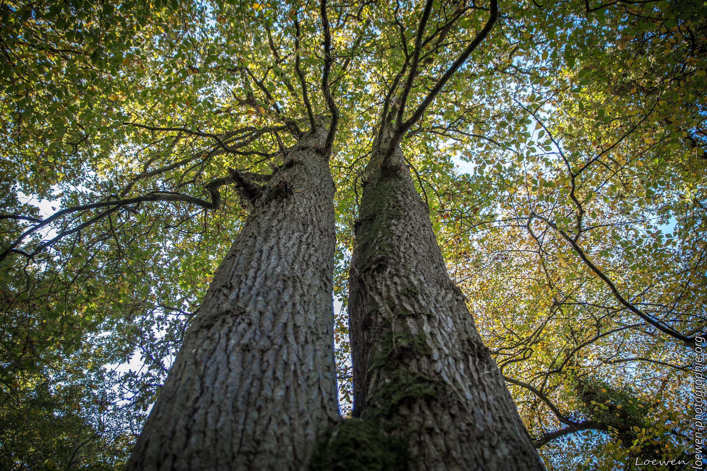 automne-4saisons-Loewen photographie-12