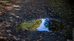 automne-4saisons-Loewen photographie-33