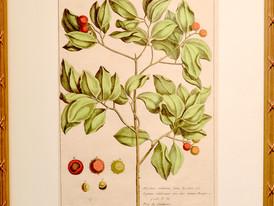 Unknown (Paris)  Unknown, 19 Century.  Hand-colored Print 52 x 34.5 cm.1.JPG
