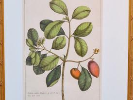 Unknown (Paris)  Unknown, 19 Century.  Hand-colored Print 52 x 34.5 cm.2.JPG