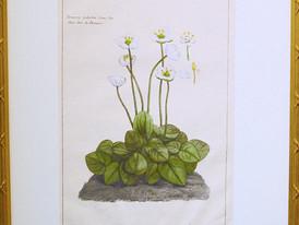 Unknown (Paris)  Unknown, 19 Century.  Hand-colored Print 52 x 34.5 cm.4.jpg
