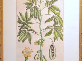 Unknown (Paris)  Unknown, 19 Century.  Hand-colored Print 52 x 34.5 cm. 3.JPG