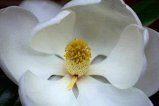 Magnolia One.jpg