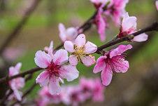 Peach Branch Two.jpg