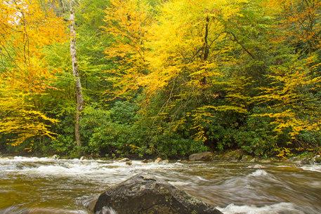 Rock and yellow.jpg