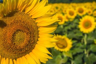 Yellow one - Copy.jpg