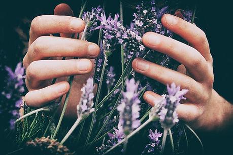 lavender hands.jpg