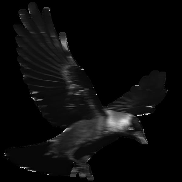 bird-lamentos.png