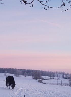 Horse w/ pastel sky