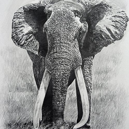 Sketch of Iconic Tsavo Tusker : SA-2