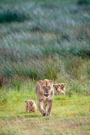 Lion Conservation 2020 Brochure.jpg
