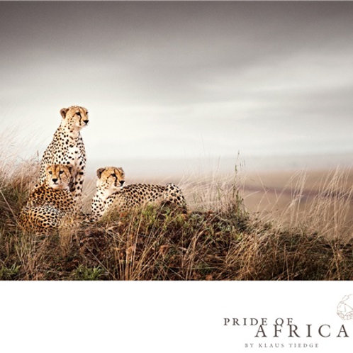 African Greeting Card - Cheetah Brothers